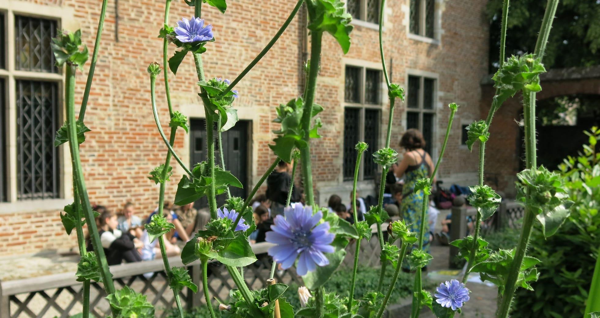 """Maison d'Érasme, atelier """"Jardin du guérisseur"""" MD"""